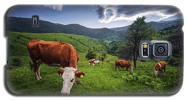 Cows Galaxy S5 Case