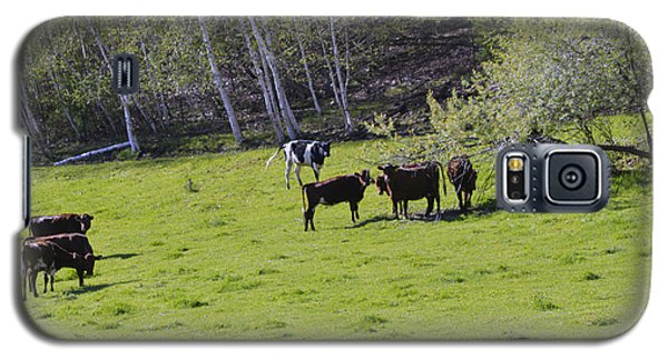 Cows In A Pasture Galaxy S5 Case