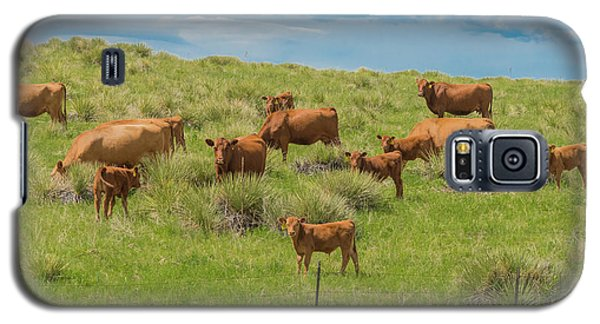 Cows In Field 1 Galaxy S5 Case