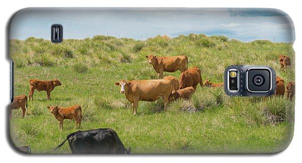 Cows In Field 3 Galaxy S5 Case