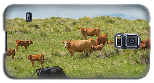 Cows In Field 3 Galaxy S5 Case