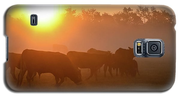 Cows In The Sunrise Mist Galaxy S5 Case
