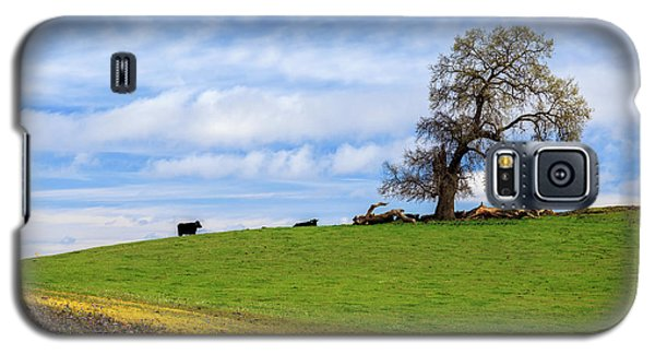 Galaxy S5 Case featuring the photograph Cows On A Spring Hill by James Eddy