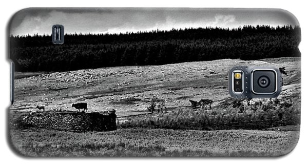Cows On A Wall Galaxy S5 Case