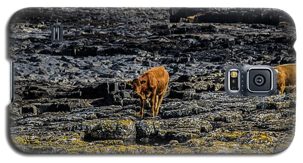 Cows On The Rocks Galaxy S5 Case