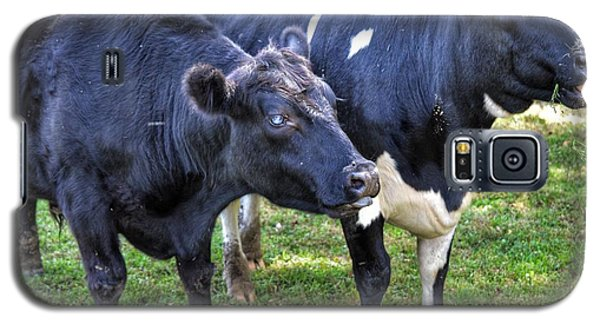 Cows Sticking Out Tongues Galaxy S5 Case