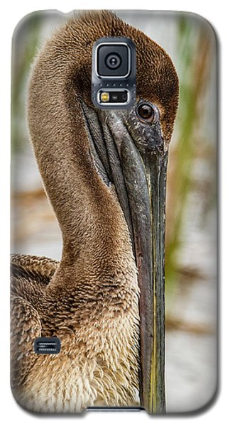Galaxy S5 Case featuring the photograph Coy Pelican by Jean Noren