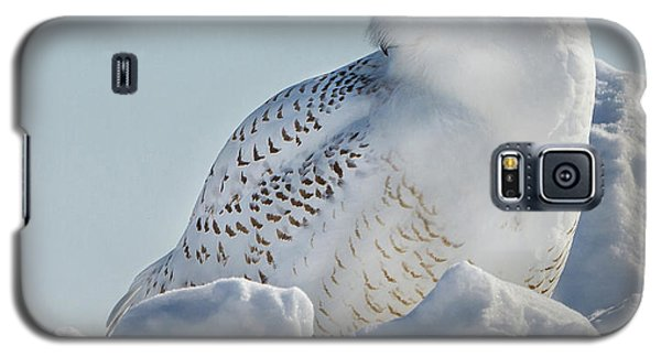 Galaxy S5 Case featuring the photograph Coy Snowy Owl by Rikk Flohr