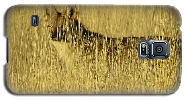 Coyote 4 Galaxy S5 Case