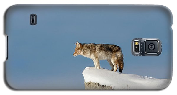 Coyote At Overlook Galaxy S5 Case
