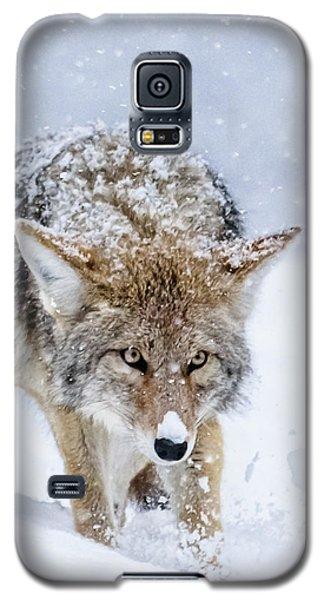 Coyote Coming Through Galaxy S5 Case