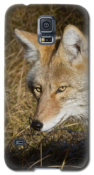 Coyote In The Wild Galaxy S5 Case