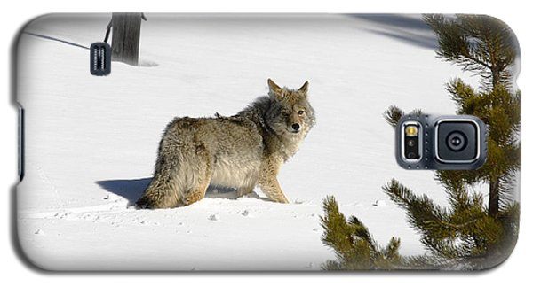 Coyote In Winter Galaxy S5 Case