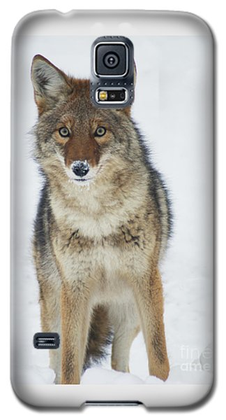 Coyote Looking At Me Galaxy S5 Case