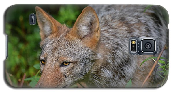 Coyote On The Hunt Galaxy S5 Case
