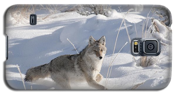 Coyote On The Move Galaxy S5 Case