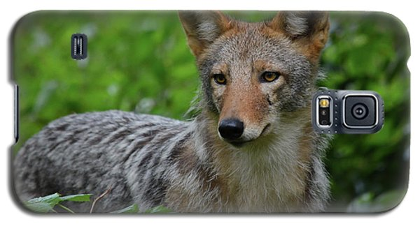 Coyote On The Prowl  Galaxy S5 Case