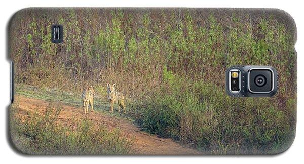 Coyotes In Morning Light Galaxy S5 Case