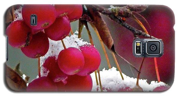 Crab Apples Snow Galaxy S5 Case