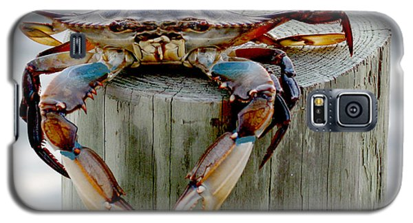 Galaxy S5 Case featuring the photograph Crab Hanging Out by Luana K Perez