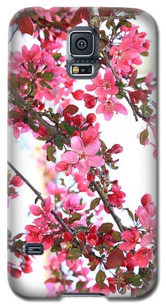 Crabapple Beauty Galaxy S5 Case