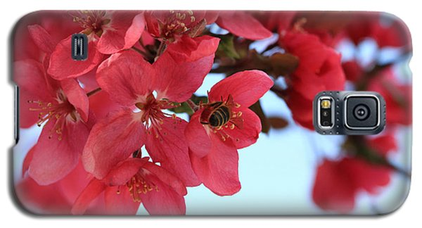 Crabapple Bees Galaxy S5 Case