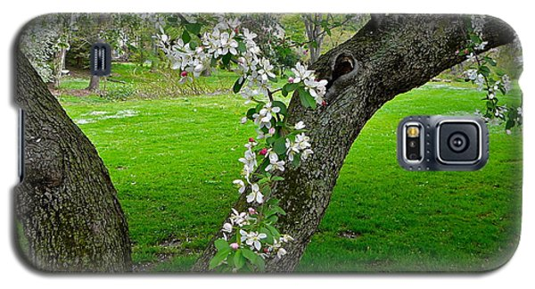 Crabapple Blossoms On A Rainy Spring Day Galaxy S5 Case by Byron Varvarigos