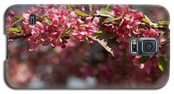 Crabapple In Spring Panoramic Galaxy S5 Case