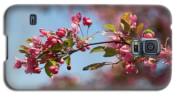 Crabapple In Spring Section 1 Of 4 Galaxy S5 Case