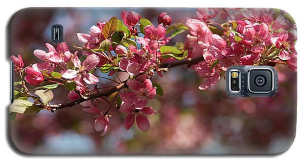 Crabapple In Spring Section 2 Of 4 Galaxy S5 Case
