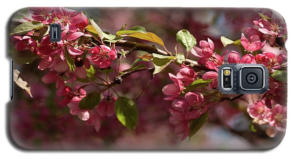 Crabapple In Spring Section 3 Of 4 Galaxy S5 Case