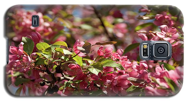 Crabapple In Spring Section 4 Of 4 Galaxy S5 Case