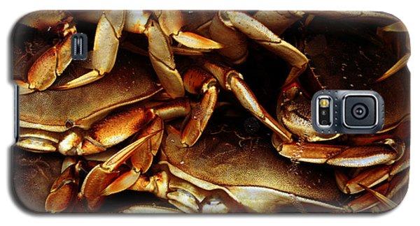 Crabs Awaiting Their Fate Galaxy S5 Case