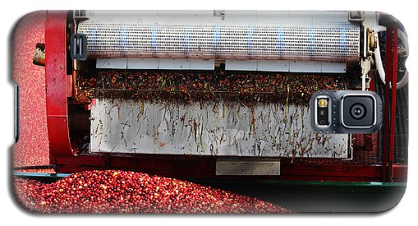 Cranberry Harvest Galaxy S5 Case by Andrew Pacheco