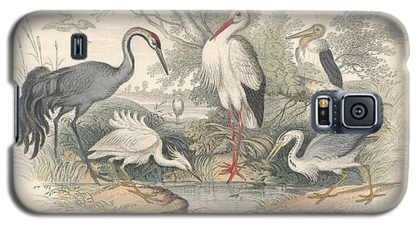 Cranes Galaxy S5 Case by Dreyer Wildlife Print Collections