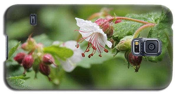Cranesbill Raindrops Galaxy S5 Case