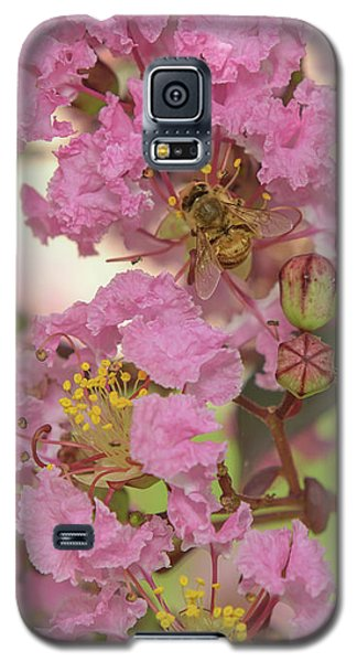 Crepe Myrtle And Bee Galaxy S5 Case by Olga Hamilton