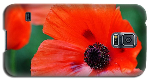 Crepe Paper Petals Galaxy S5 Case by Debbie Oppermann