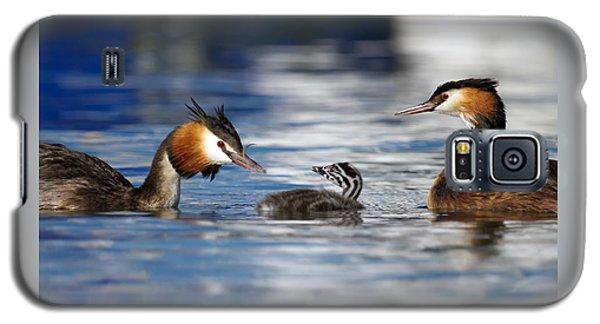 Crested Grebe, Podiceps Cristatus, Ducks Family Galaxy S5 Case