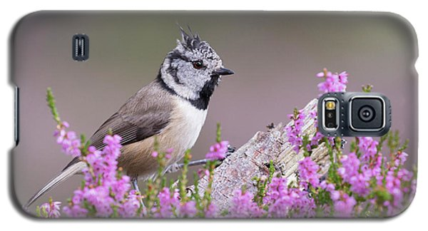 Crested Tit In Heather Galaxy S5 Case