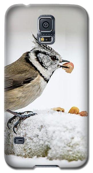 Crested Tit's Catch A Peanut Galaxy S5 Case