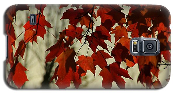 Galaxy S5 Case featuring the photograph Crimson Red Autumn Leaves by Chris Berry