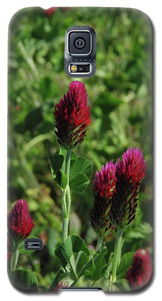 Crimson Clover Galaxy S5 Case by Robyn Stacey