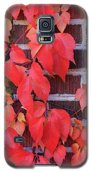 Crimson Leaves Galaxy S5 Case