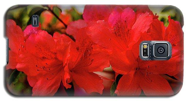 Crimson Lights Galaxy S5 Case