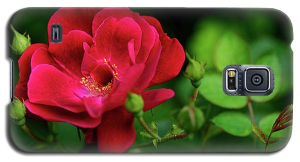 Galaxy S5 Case featuring the photograph Crimson Red Rose By Kaye Menner by Kaye Menner