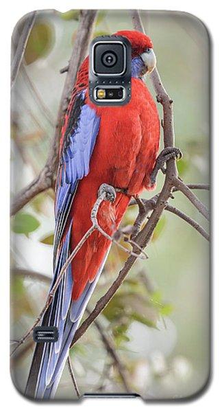 Crimson Rosella 01 Galaxy S5 Case