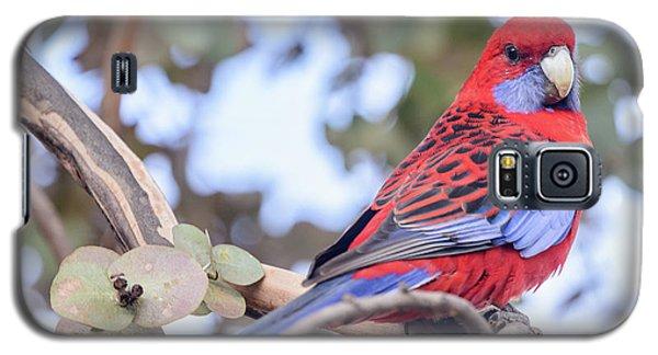 Crimson Rosella 03 Galaxy S5 Case