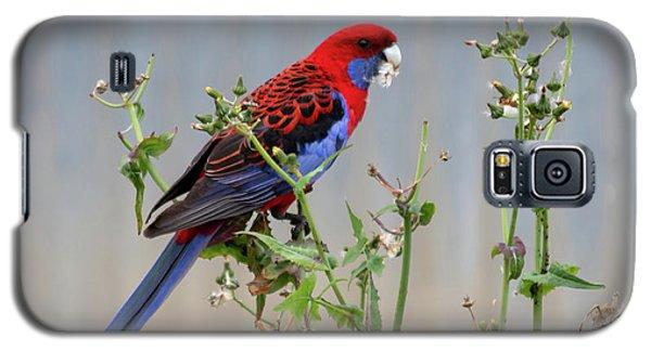 Crimson Rosella Galaxy S5 Case