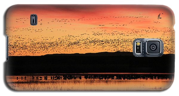 Crimson Sunset At Bosque Galaxy S5 Case